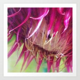 Prickly Petals Art Print