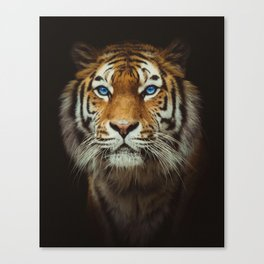 Wild Tiger with Blue eyes Canvas Print