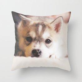 "siberian husky puppy - ""nova"" Throw Pillow"