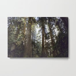 British Columbia Forest Metal Print