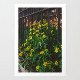 Brooklyn Blooms II Art Print