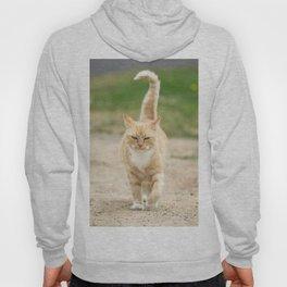 Ginger Cat Walking Hoody