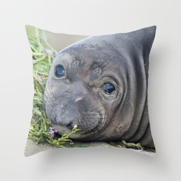 Northern Elephant Seal Pup Throw Pillow