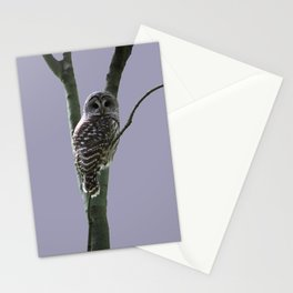 Lavender Barred Owl Stationery Cards