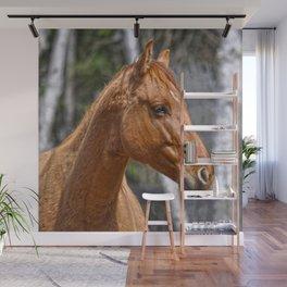 Equus Wall Mural