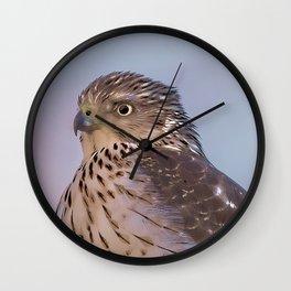 Watercolor Falcon Wall Clock