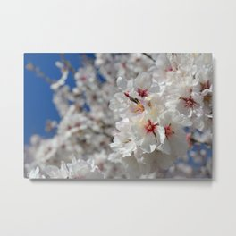 White spring Metal Print