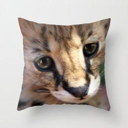 Serval Kitten  Throw Pillow