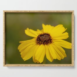 Yellow California Brittlebush Flower - Nature Photography Serving Tray