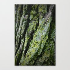 moss, bark Canvas Print