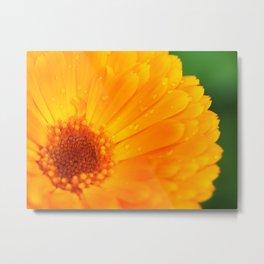 orange flower. macro Metal Print