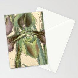 Paphiopedilum hirsutissimum (as Cypripedium hirsutissimum) Curtis 83 4990 (1857) Stationery Cards