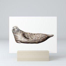 Grey Seal (Halichoerus grypus) Mini Art Print
