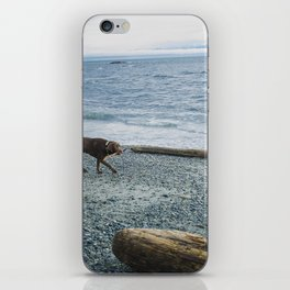 Pup on a beach iPhone Skin