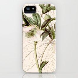 Helleborus orientalis iPhone Case