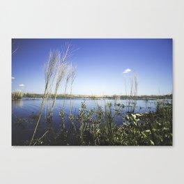 Wate Reeds Canvas Print