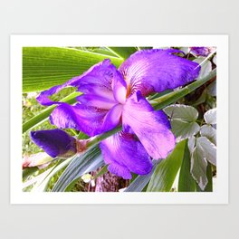 In Honor Of An Amazing Father: My Dad's Iris Art Print