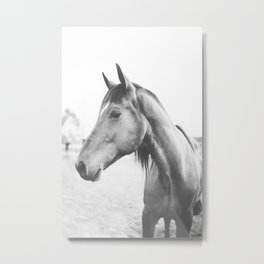 bw horse, equestrian, black and white horse, thoroughbred Metal Print