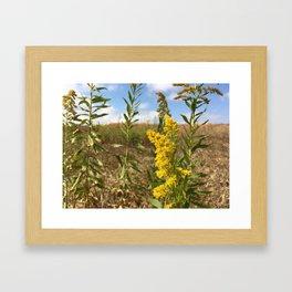Tennessee Goldenrod Framed Art Print
