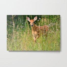 Little Baby Deer Metal Print