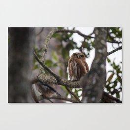 Birds from Pantanal Caburé Canvas Print