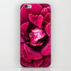 Botanical gardens rose iPhone & iPod Skin