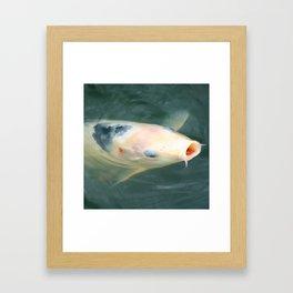 Coy Koi Framed Art Print