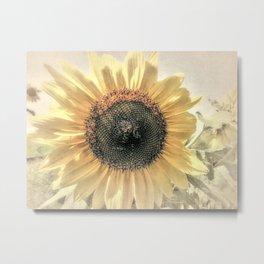 Soft Sunflower Flower Modern Country Home Decor Cottage Art A421a Metal Print