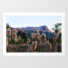 Birdsong on the Marina Art Print