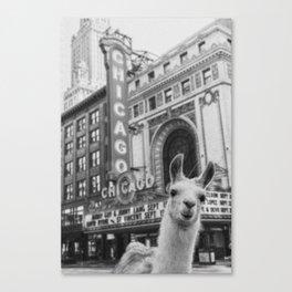 Chicago Llama Canvas Print