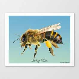 Honey Bee Original Watercolour Painting Alison Langridge Wildlife Nature Watercolor Artist Canvas Print