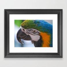 Beautiful Parrot Head Framed Art Print