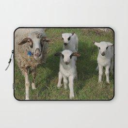 Ewe and Three Lambs Making Eye Contact Laptop Sleeve