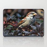 sparrow iPad Cases featuring Sparrow by Elaine C Manley