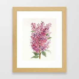 Pink Lilacs Floral Watercolor Garden Flower Nature Art Framed Art Print