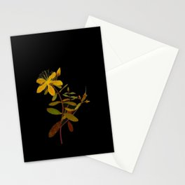 Hypericum Monogynum Mary Delany Vintage Botanical Floral Collage Delicate Paper Flowers Stationery Cards