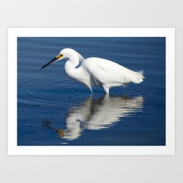 Bird series: Snowy Egret Art Print