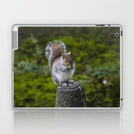 The Chubby Squirrel Laptop & iPad Skin