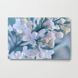 Lilacs 051 Metal Print