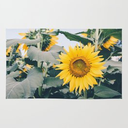 Sunflower 19 #sunflowers Rug