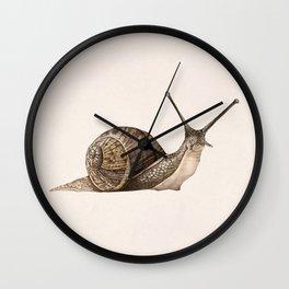snail II Wall Clock