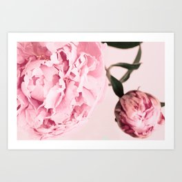 Fine Art Pastel Pink Peony Photography, Flower Art Print