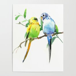 Budgies, Animal art, love, two birds bird artwork, bird pet Poster