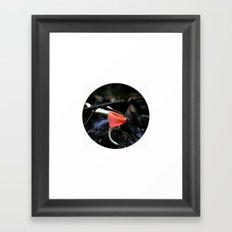 Colombian Forest Mushrooms Framed Art Print