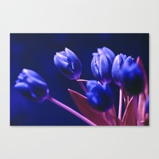 Blue Poetry of Tulips Canvas Print
