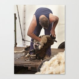 The shearer Canvas Print