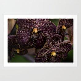 Deep Purple Orchids Art Print