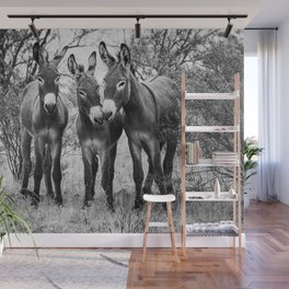 Three Wild Donkeys in the Desert Wall Mural