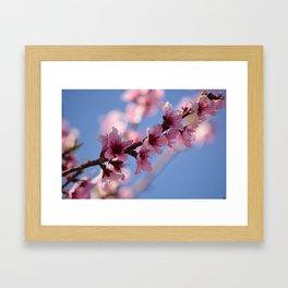 Spring Break Framed Art Print