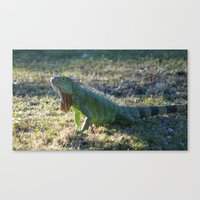 iggy Canvas Prints featuring Iggy by Still Light